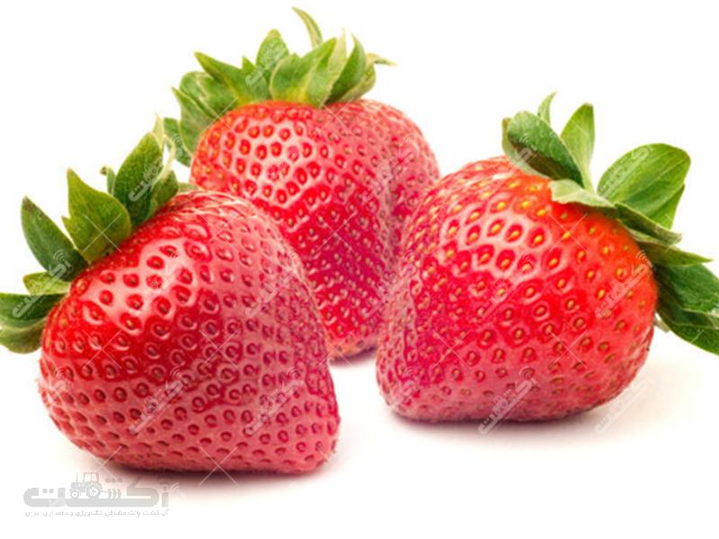 فروش نشاء و بوته درجه یک و پر محصول توت فرنگی