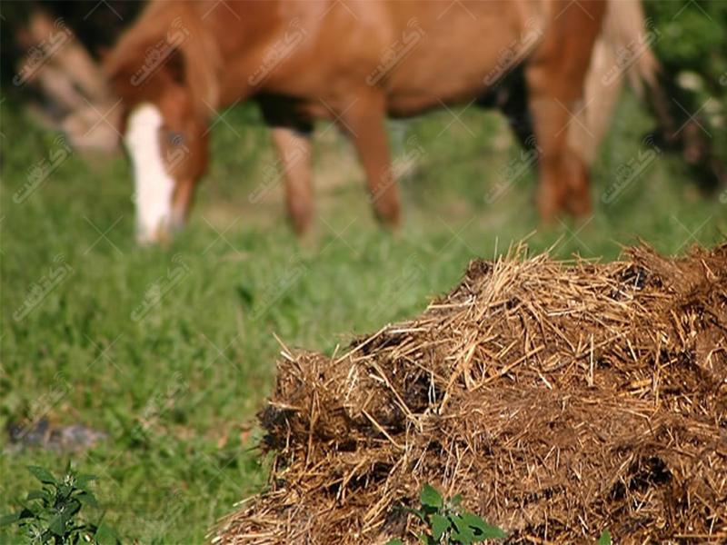 اولین و بزرگترین عرضه کننده کود حیوانی %100 ارگانیک
