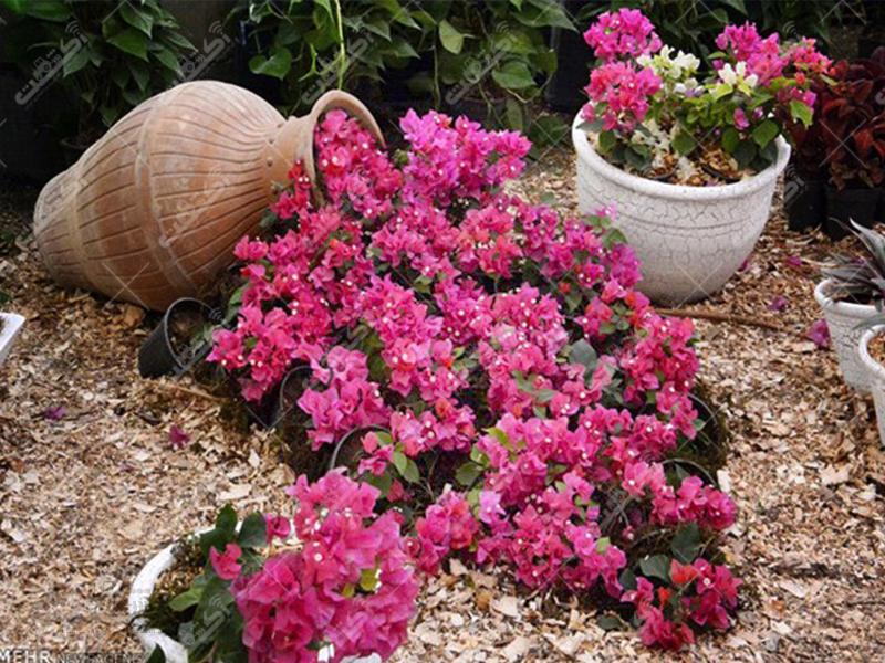 مجتمع تولیدی گل و گیاه سلیمانی