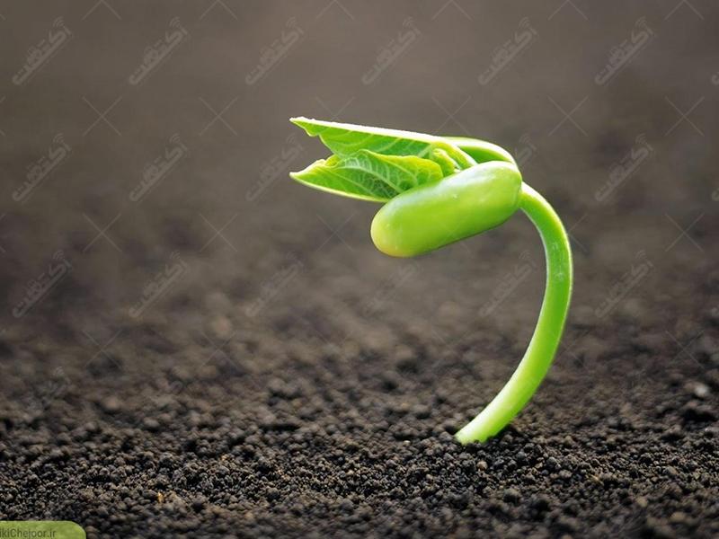 شرکت تعاونی سامان سبزینه کاوان فروشنده سم کود بذر