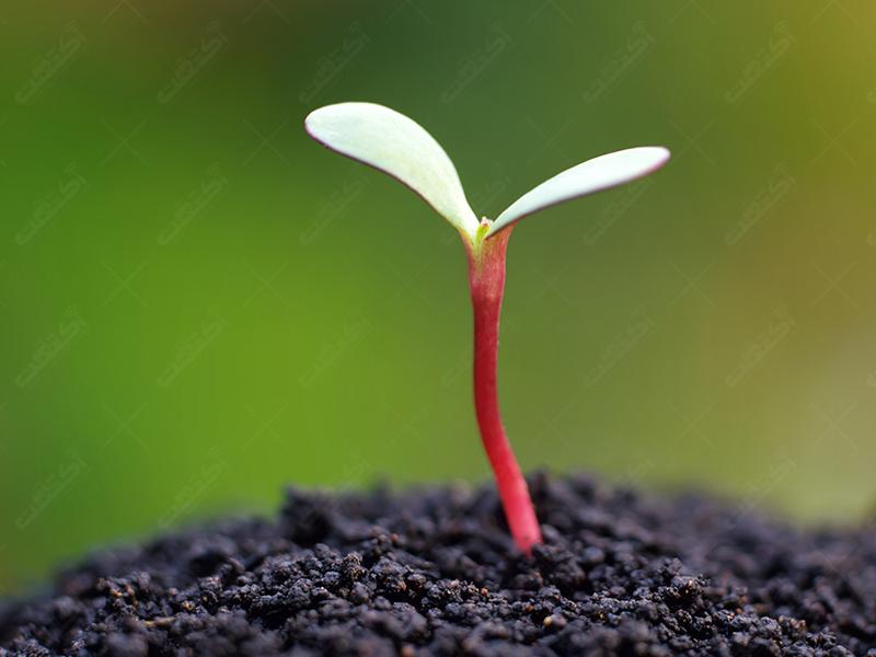 فروشگاه طبیعت سبز توزیع کننده کودهای ارگانیک