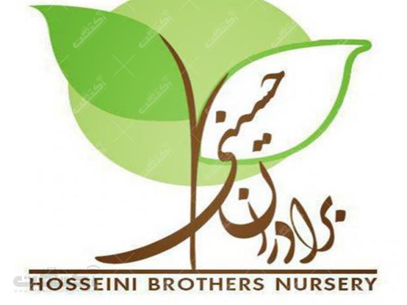 فروش نهال در نهالستان برادران حسینی