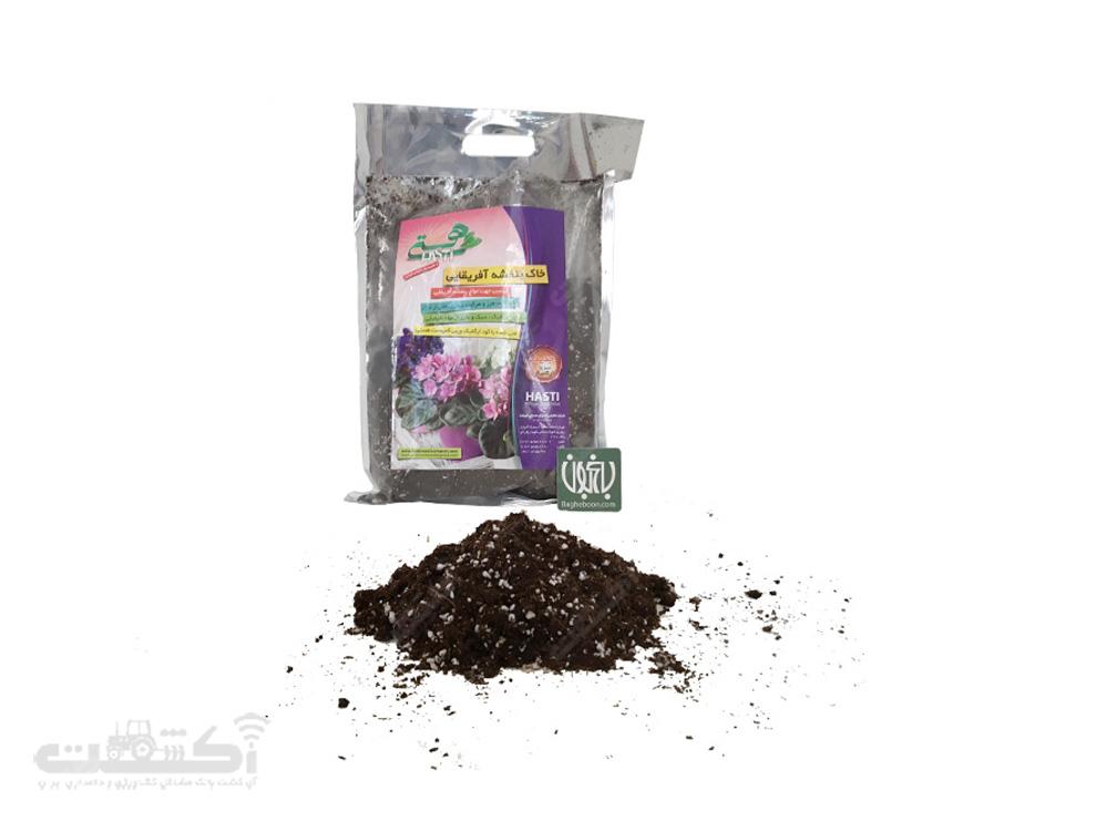 فروش خاک بنفشه آفریقایی هستی