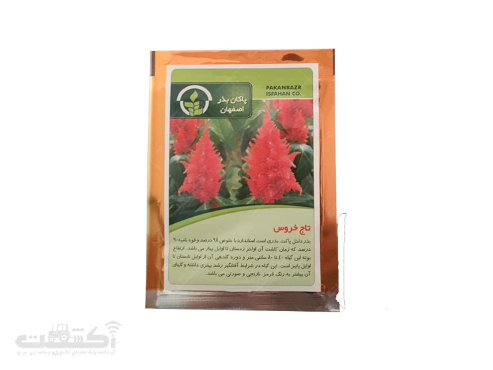 فروش بذر گل تاج خروس