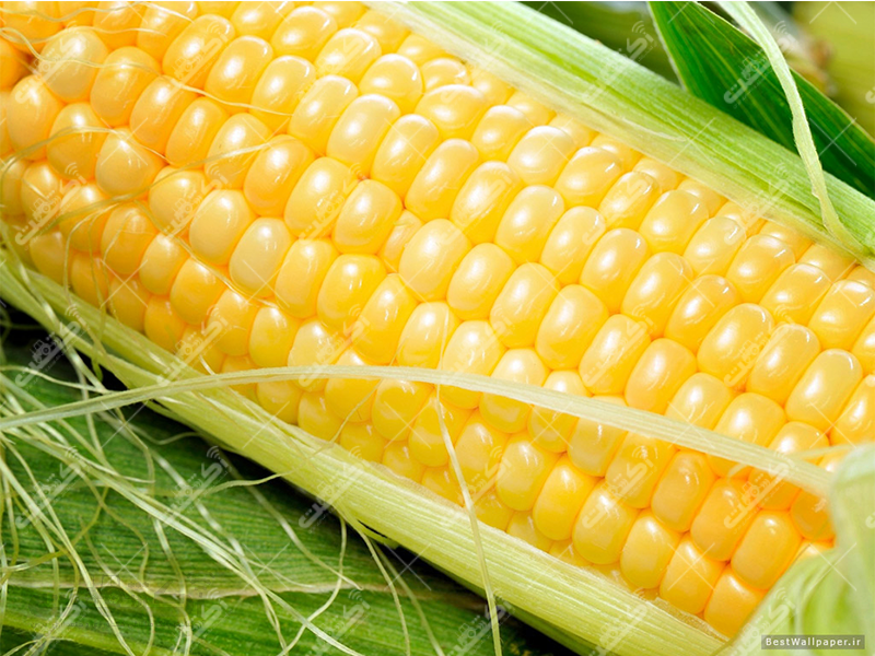 فروش محصولات کشاورزی،آبیک