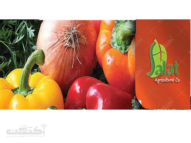 شرکت فلات ایرانیان زمین