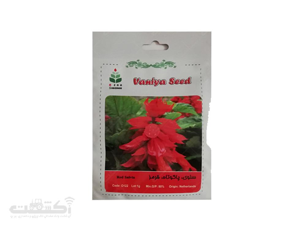 فروش بذر گل سلوی پاکوتاه