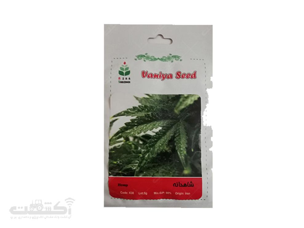 فروش بذر گیاه دارویی شاهدانه