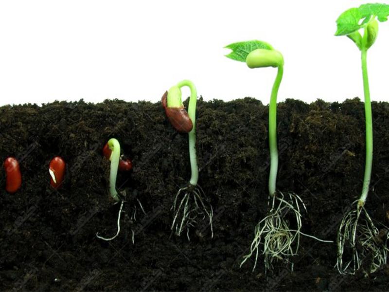 گروه نهاد های کشاورزی نیام توزیع کودهای آلی و ارگانیک