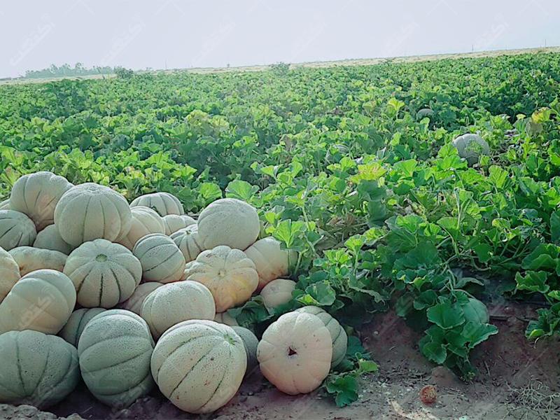 کارشناس و ناظر زمینهای کشاورزی