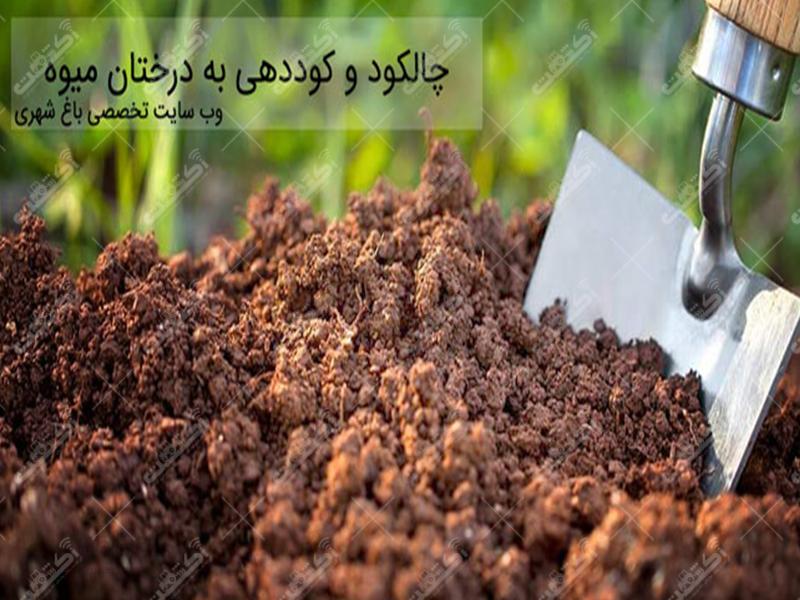شرکت برگ سبز ایرانیان