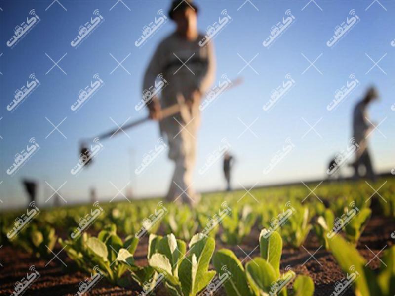 دفتر کشاورزی مهندس خرمالی