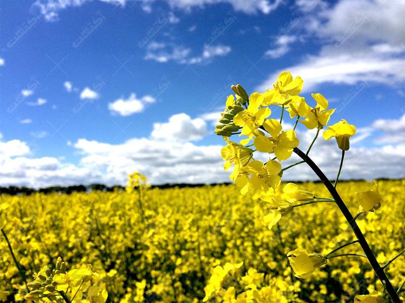 خدمات کشاورزی حشمتی برگ سبز