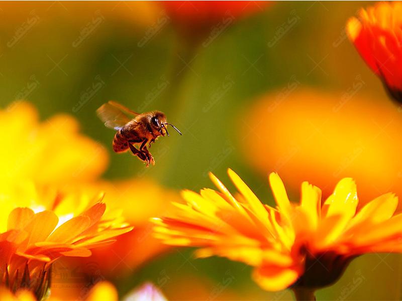 مرکز پرورش زنبور عسل
