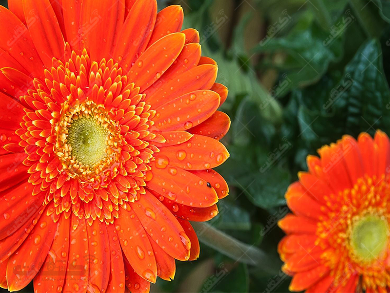 گل و گیاه بست
