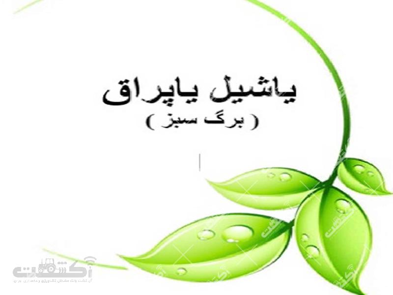 یاشیل برگ فروش و واردات بذر