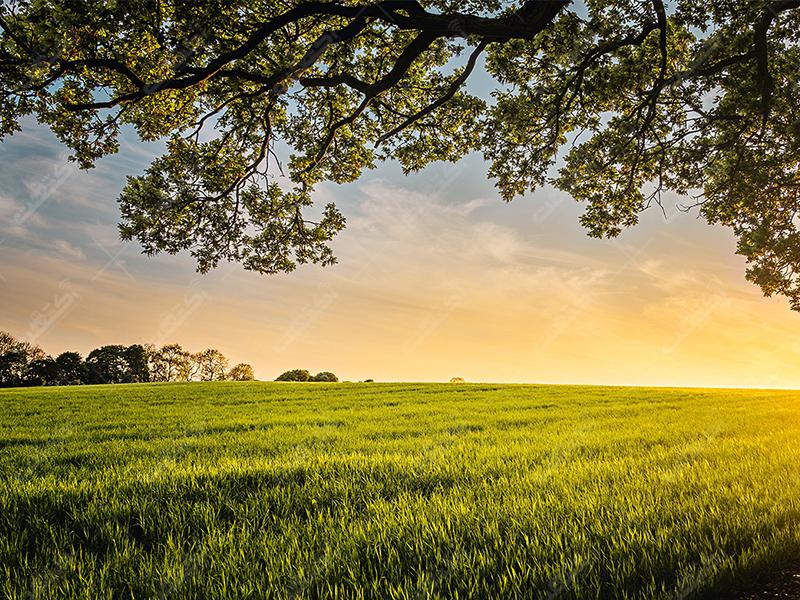 خدمات کشاورزی آبرون دشت سبز