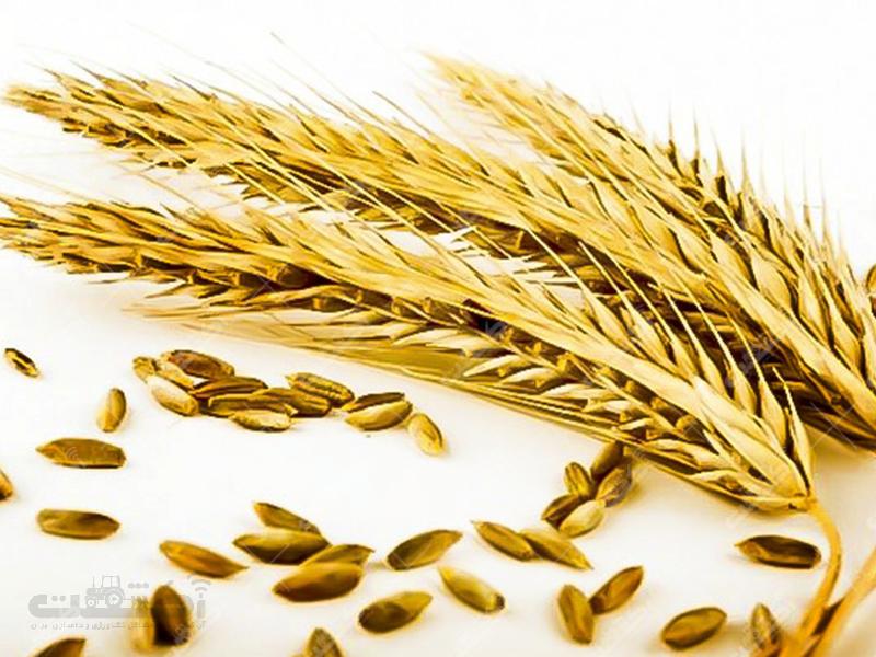 شرکت کشاورزی خوشه های طلایی شاهوار