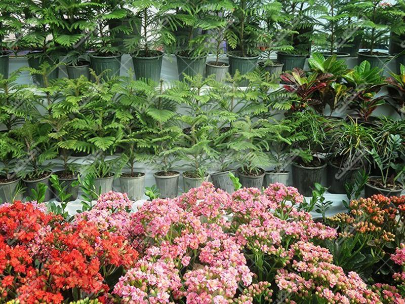 مجتمع تولیدی گل و گیاه یاس،البرز