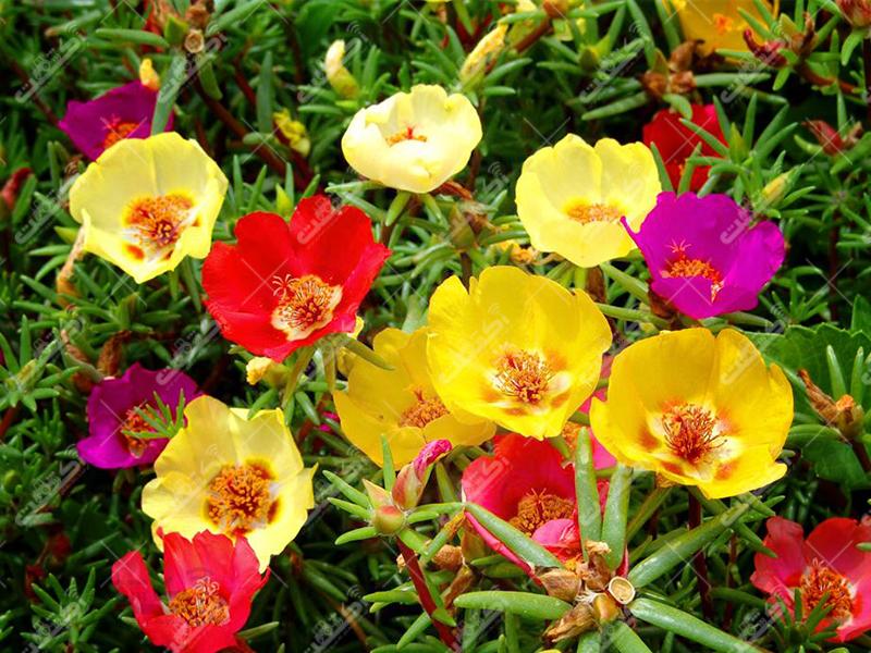 مجتمع گل و گیاه هاشم پور