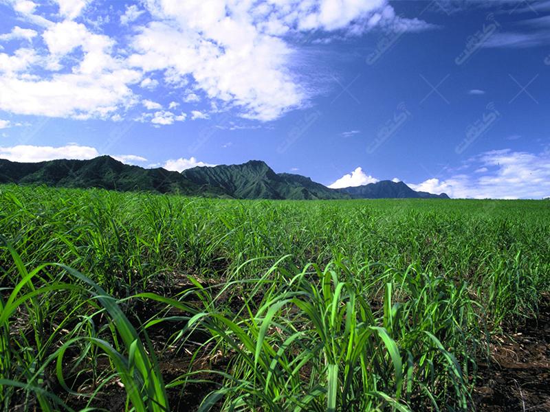 دفتر خدمات کشاورزی سبزینه،فیروز کوه