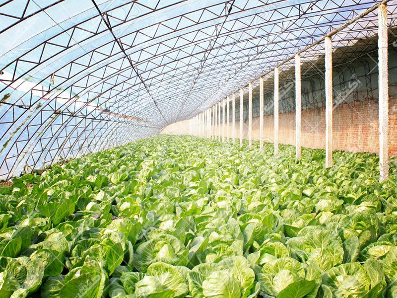 شركت كشت و صنعت سبز آفرين نيشابور