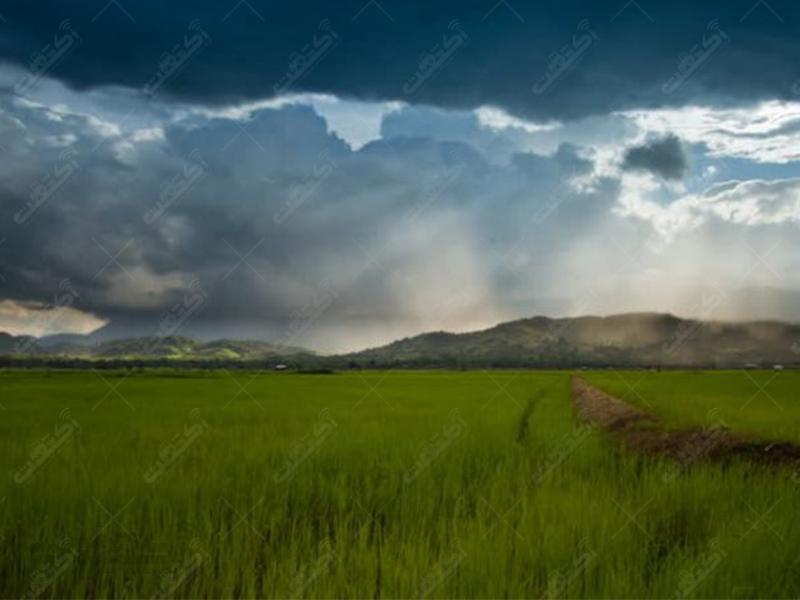 شرکت باران نوید سبز