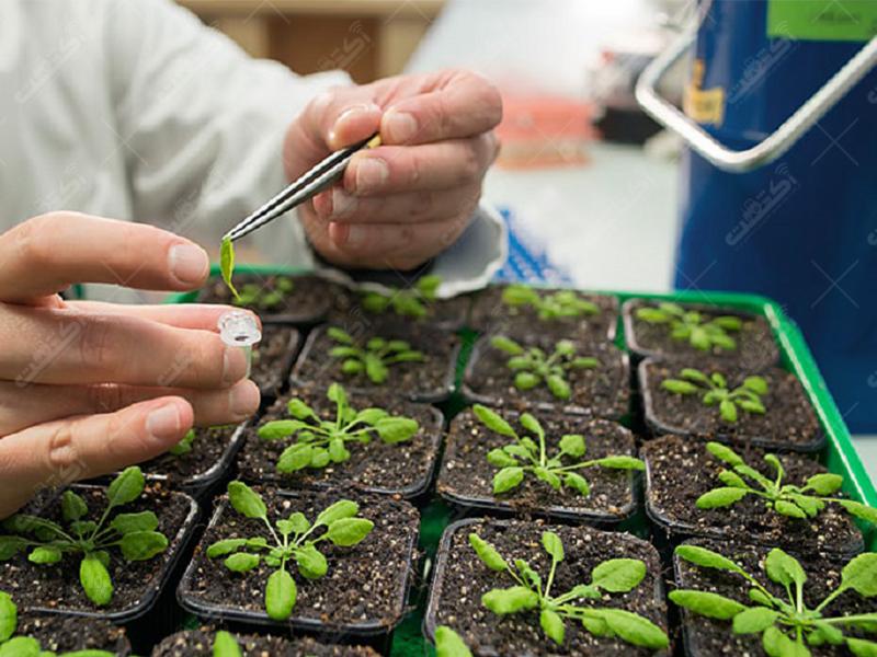 کلینیک گیاهپزشکی بیست جردی،سبزوار