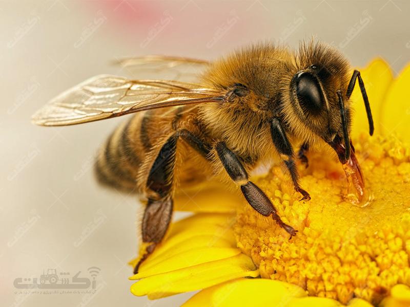 زنبورداری بالازاده، جوریم،تبریز