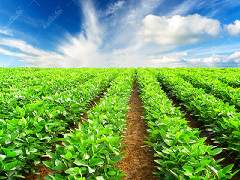 شرکت مزرعه نمونه الزهرا