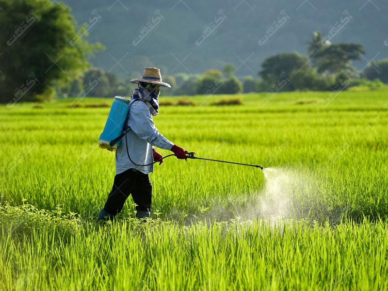 شرکت تعاونی کشاورزان بردسکن