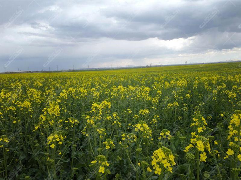 کلینیک گیاهپزشکی زارع،کردستان