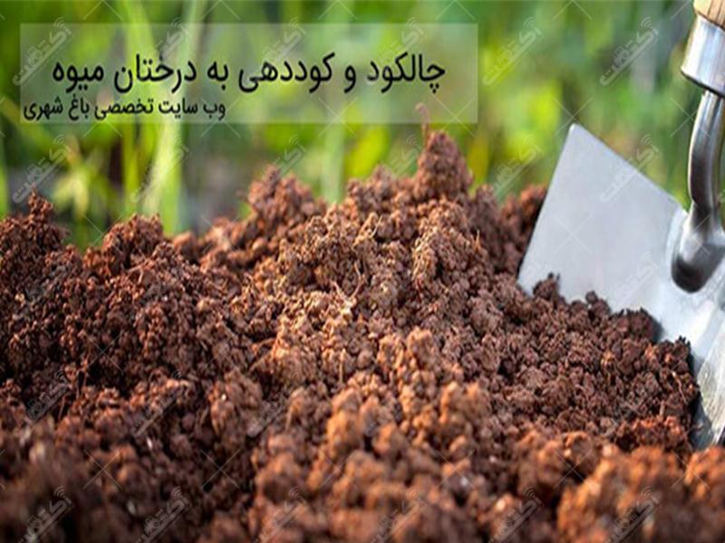 شرکت برگ سبز ایران