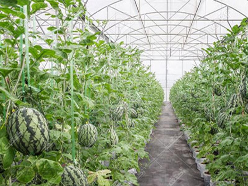 شرکت گلخانه ساز گل سبز میثاق
