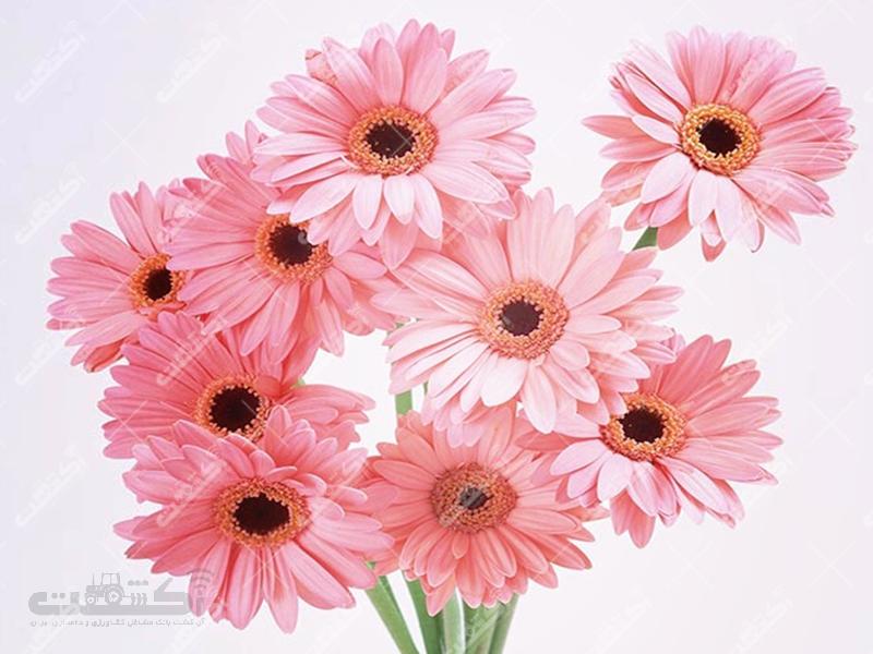 گروه تولیدی گل و گیاه فروزان