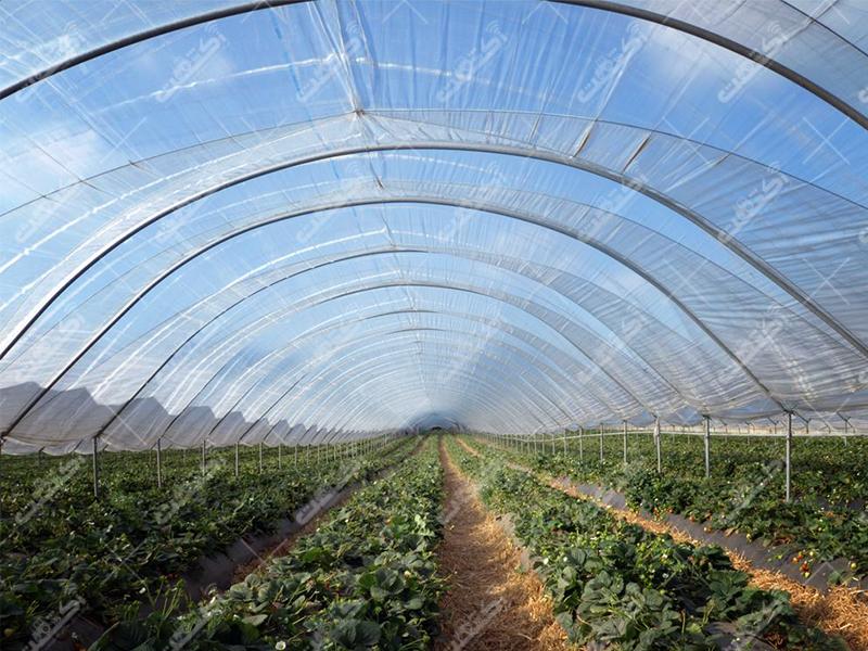 تولیدی کشاورزی رویش عمران