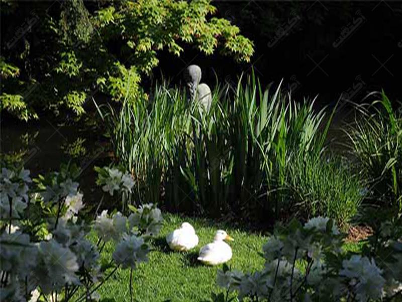 شرکت باغ نیلوفر آبی