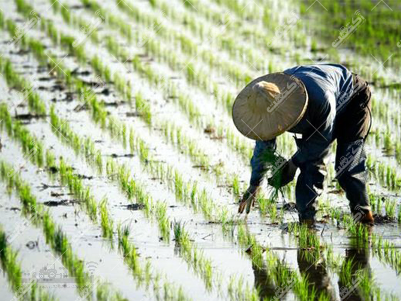 مشاوره و تغذیه گیاهان زراعی، باغی و گلخانه ای