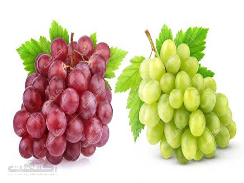 شرکت خوشه آوری محصولات انگور