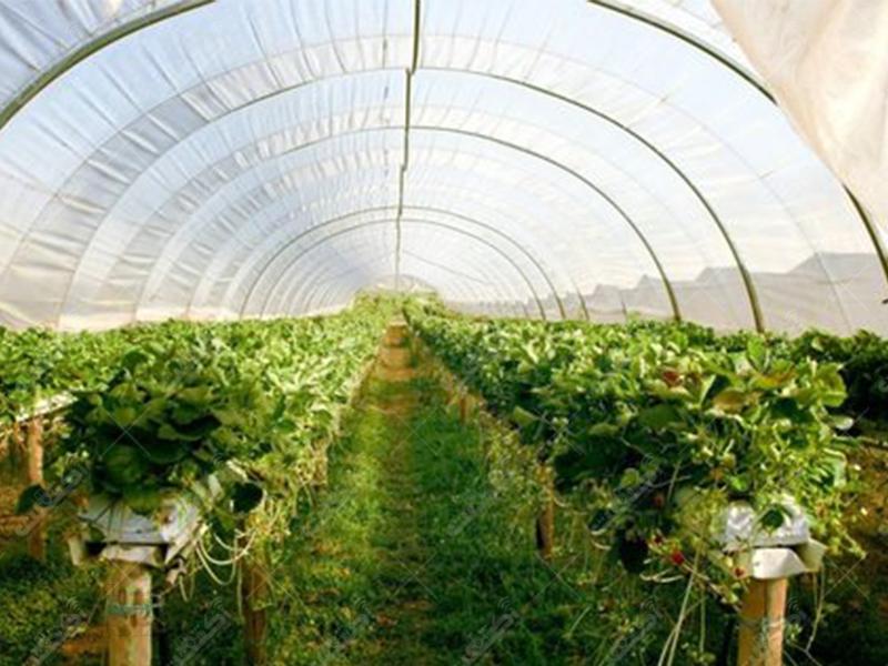 شرکت آژار پخش محصولات گلخانه ای