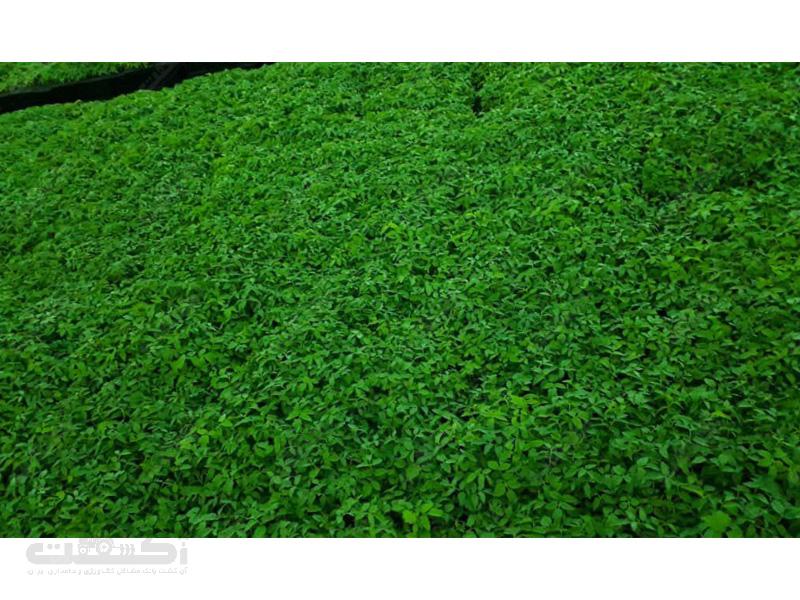 شرکت جوانه سبز