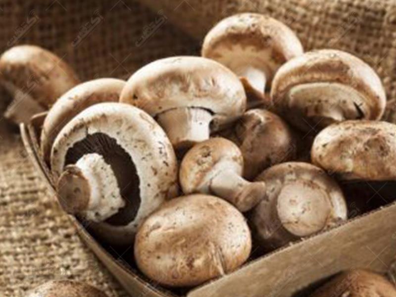 شرکت قارچ خوراک طلایی