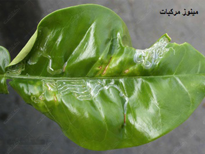 کلینیک گیاهپزشکی طلایه داران کشت البرز