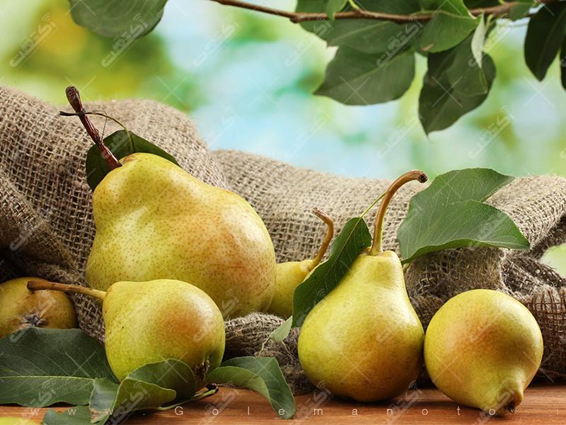 تحویل نهال درختان میوه در محل