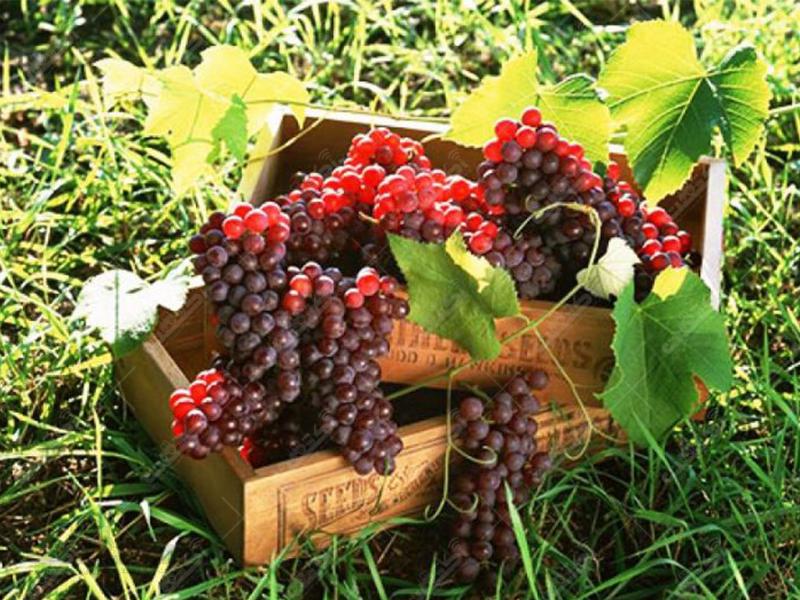 اتحادیه شرکت های تعاونی تولید روستایی استان آذربایجان غربی