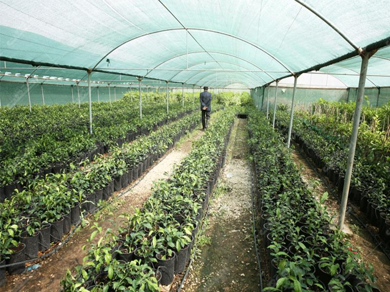 شرکت تعاونی تولیدکنندگان گل و گیاه ستاره سبز چالوس