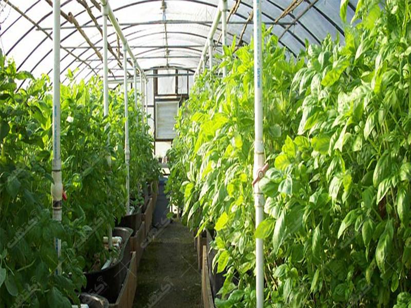 شرکت تعاونی تولیدکنندگان محصولات گلخانه ای شهرستان تیران و کرون