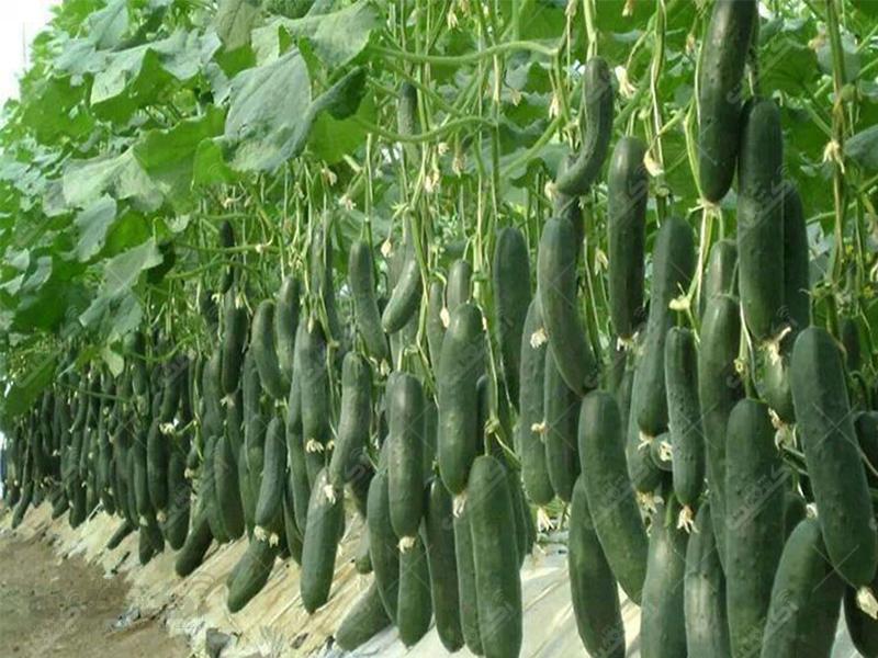 شرکت تعاونی تخصصی گلخانه داران سلامت شهرستان گرمسار و آرادان