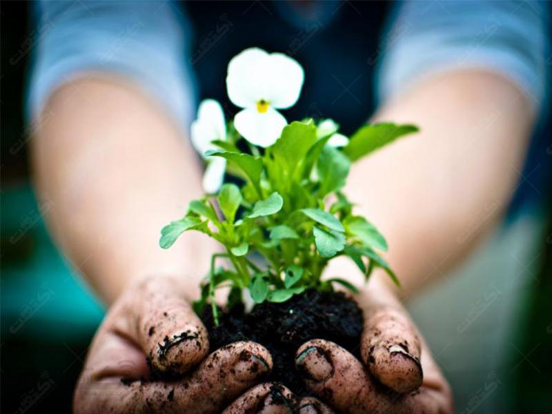 خدمات گل و گیاه سیتروس