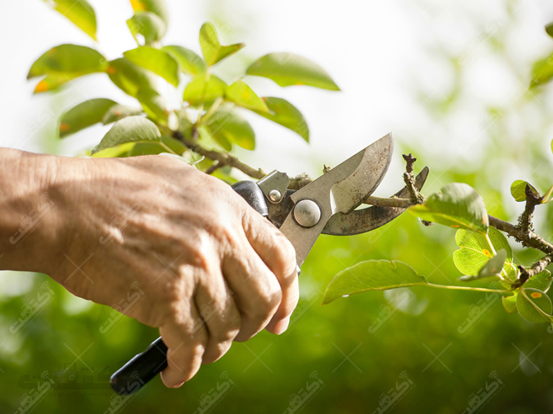 انجام کلیه خدمات کشاورزی و باغبانی درکرج و حومه